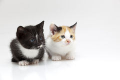 Two small cats Stock Photos