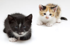 Two small cats Stock Images