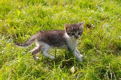 Cute kitten playing in the garden. Two small cats in the grass. Cute kitten playing in the garden stock images