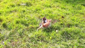 Cute kitten playing in the garden stock footage
