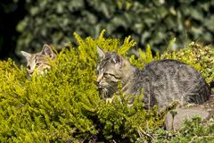 Two small cats Royalty Free Stock Photography