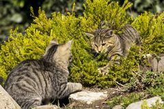 Two small cats Royalty Free Stock Images