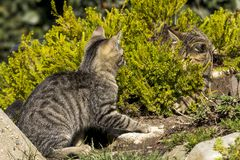 Two small cats Stock Photography
