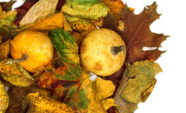 Two small decorative pumpkins on autumn dry multicolor leafs. View from above Royalty Free Stock Image