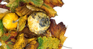 Two small decorative pumpkins on autumn leafs Royalty Free Stock Image