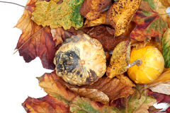 Two small decorative pumpkins on autumn leafs. View from above Stock Photo