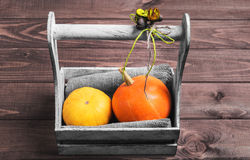Two small decorative pumpkins Royalty Free Stock Images