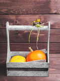 Two small decorative pumpkins Royalty Free Stock Photo