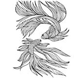 Two small fishes, yin-yang, hand-drawn,  illustration Stock Image