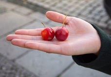 Two small fresh red apples crab in a female hand in a dark green Royalty Free Stock Photos