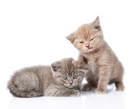 Two small funny kittens.  on white background Royalty Free Stock Photo