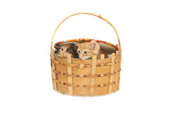 Two small kittens in big basket Stock Images