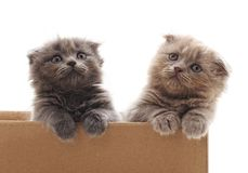 Two small kittens in the box. Royalty Free Stock Photo