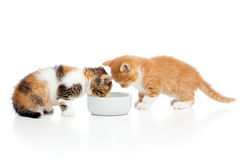 Two small kittens cats lap milk from bowl Royalty Free Stock Photos