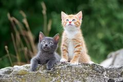 Two small kittens posing outdoors in summer. Adorable kittens outdoors in summer royalty free stock photos