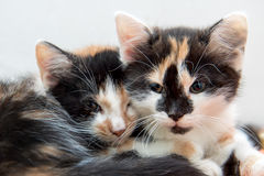 Two small kittens resting together on a blanket. Stock Photos