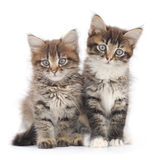 Two small kittens royalty free stock photography
