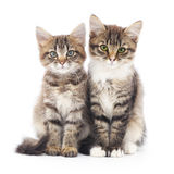 Two small kittens Stock Photography