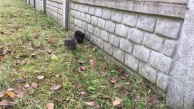 Two small kittens sitting in the grass near the fence. Video two small kittens sitting in the grass near the fence stock video footage