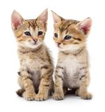 Two small kittens. Two small kittens  on white background Stock Photography