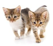 Two small kittens royalty free stock photos
