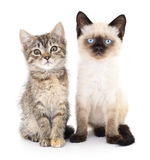 Two small kittens Royalty Free Stock Photo
