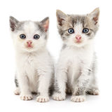 Two small kittens. Stock Image