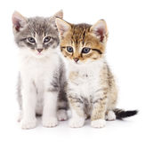 Two small kittens Stock Image