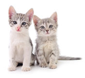 Two small kittens. Two small kittens on white background Royalty Free Stock Photography