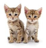 Two small kittens. Stock Photos