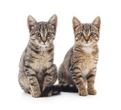 Two small kittens. Stock Images