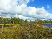 Two small lake and trees in Aukstumalos swamp, Lithuania royalty free stock images