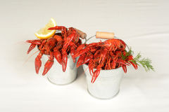Two small pails full of small lobsters Stock Images