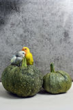 Two small parrots. On a zucchini Royalty Free Stock Photo