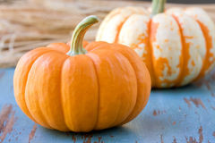 Two small pumpkins Royalty Free Stock Photos
