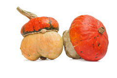 Two small pumpkins with hat Royalty Free Stock Photo