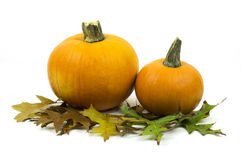 Two small pumpkins sitting among fall leaves isolated. Two small pumpkins among fall leaves Royalty Free Stock Image