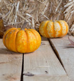 Two Small Pumpkins Royalty Free Stock Photo