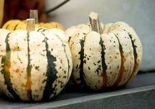 Two small pumpkins Stock Photos