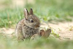 Two small rabbits Royalty Free Stock Photography