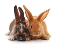 Two small rabbits. Two small rabbits on a white background Royalty Free Stock Photography