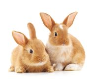 Two small rabbits. Two small rabbits on a white background Stock Photography