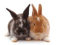 Two small rabbits. Two small rabbits on a white background Royalty Free Stock Images
