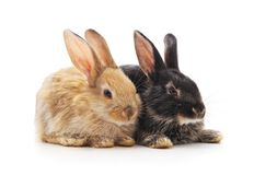 Two small rabbits. Two small rabbits on a white background stock image