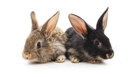 Two small rabbits. Two small rabbits on a white background royalty free stock photos