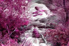 Two river streams in autumn colors. Two small river streams with blurred flow  and trees in purple color. Cetina river, Croatia Royalty Free Stock Image