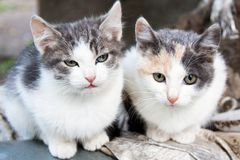 Two small spotted kittens Royalty Free Stock Photography