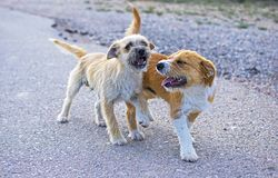 Two small stray dogs abandoned lonely on the road royalty free stock photo