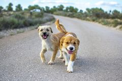 Two small stray dogs abandoned lonely on the road royalty free stock images