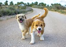 Two small stray dogs abandoned lonely on the road royalty free stock photos